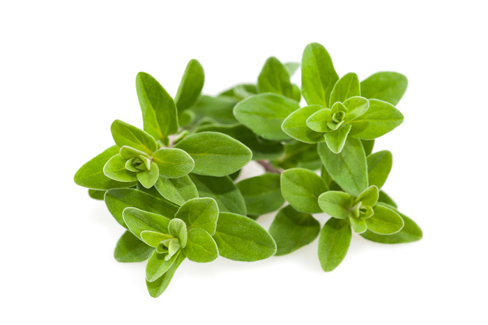 Substitutes for Tarragon